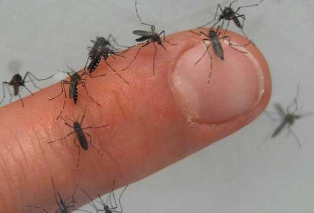 ¿Qué es el zika, el virus que se está propagando por América Latina?