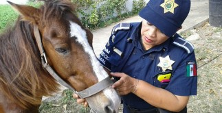 caballo_tierrero_rescatado