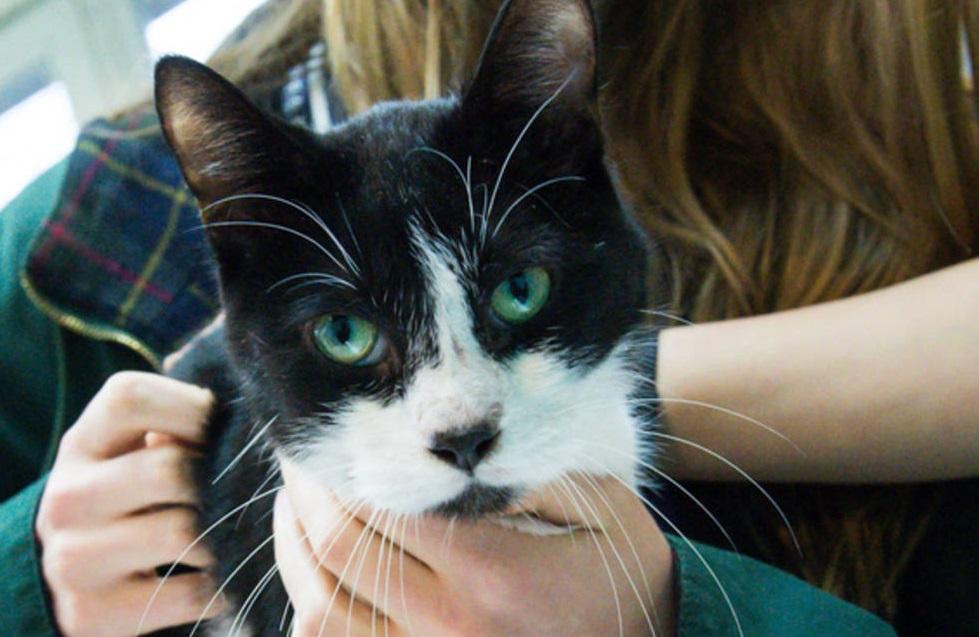Clínica en Irlanda ofrece trabajo como 'Abrazador de gatos'