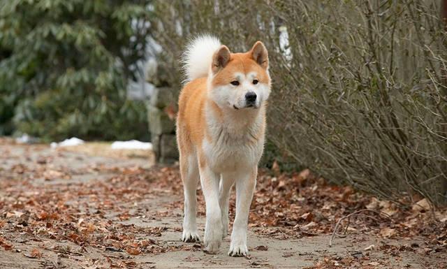 Tu perro surgió hace 33 mil años a partir de lobos del sur de China
