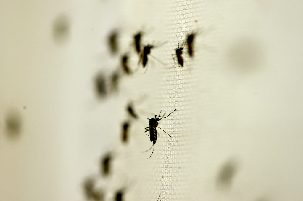 Aprueba México la primera vacuna contra el dengue