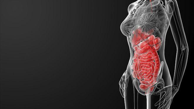 El sorprendente número de órganos que son prescindibles