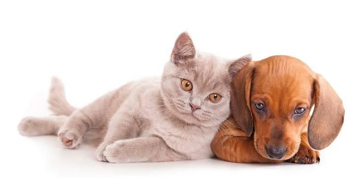 Gastos financieros, tercera causa de abandono animal