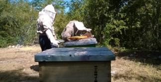 apicultores1