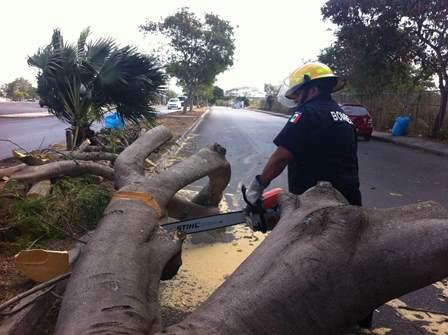 Cae árbol frente al Kukulcán