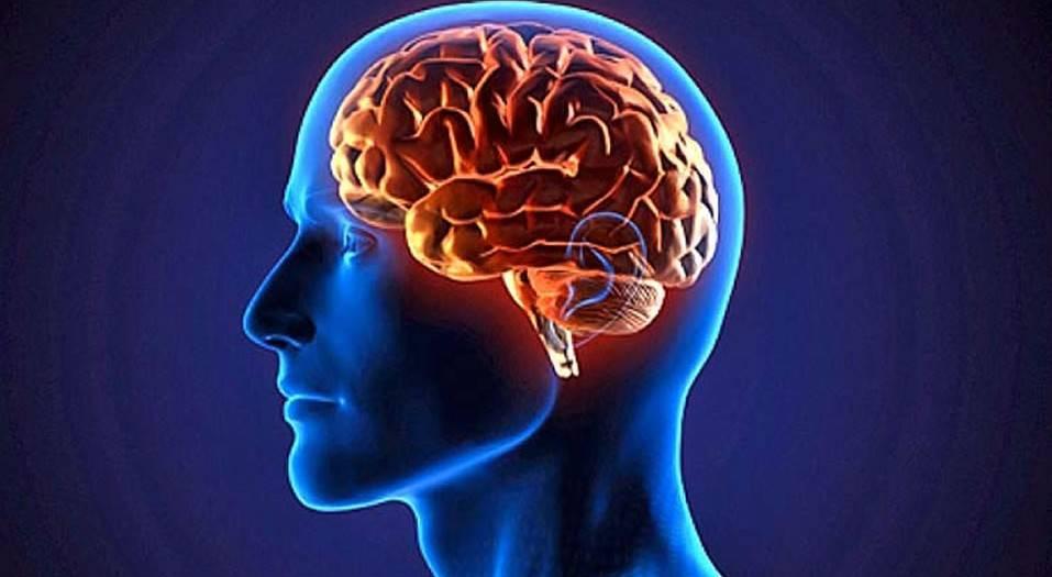 "El ""Cerebro espiritual"""