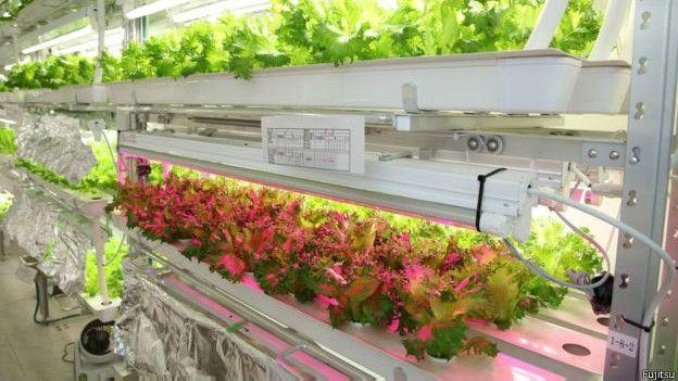 La nube que puede cambiar la historia de los vegetales que comemos
