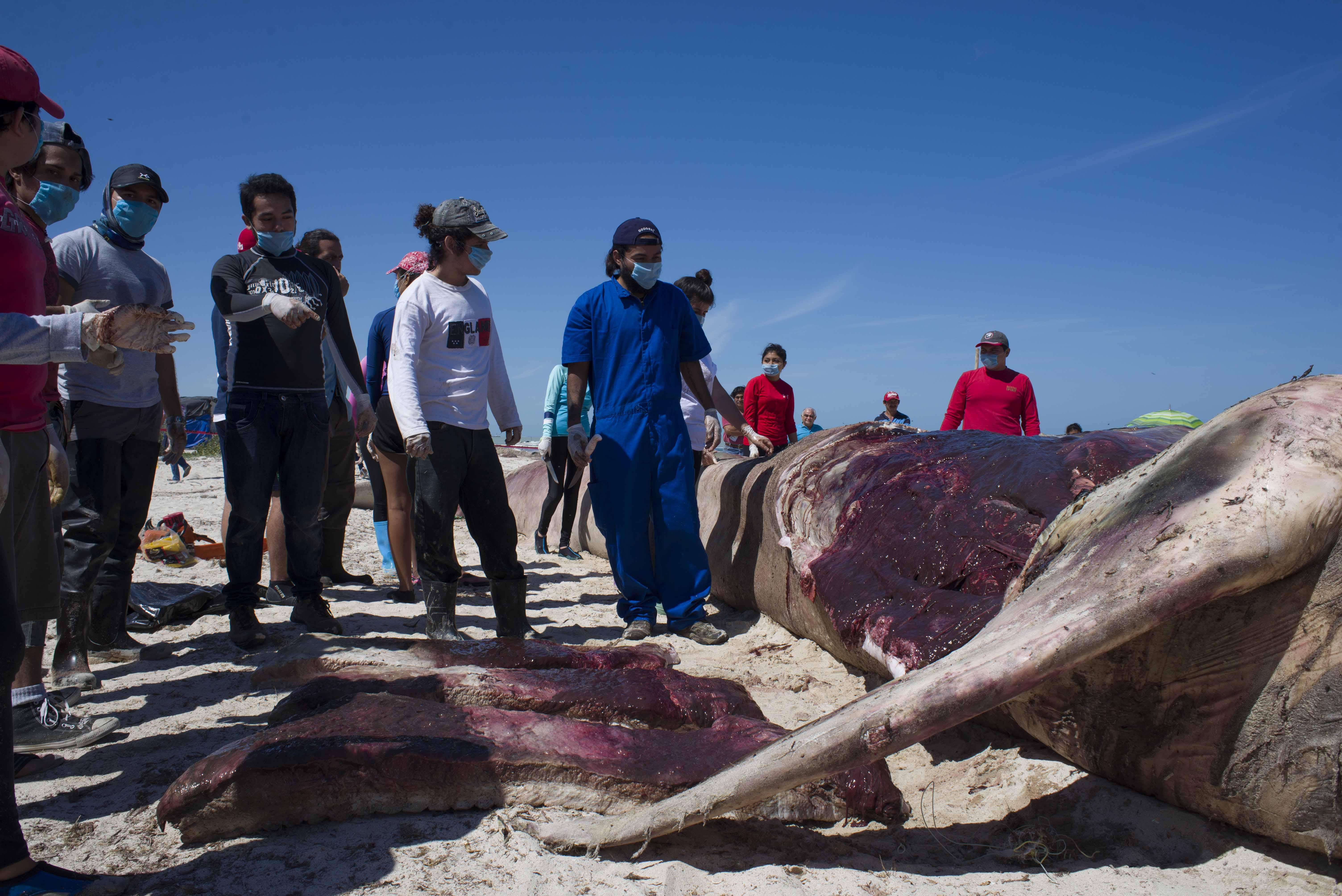 Gigante marino habría muerto por enfermedad