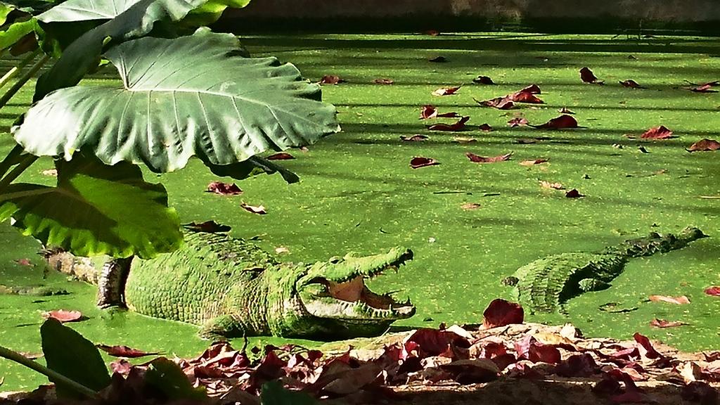 Quieren intervención de Profepa en zoo de Mulsay