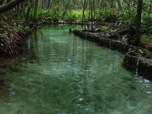 """Valoran con """"buena salud"""" manglares en México"""