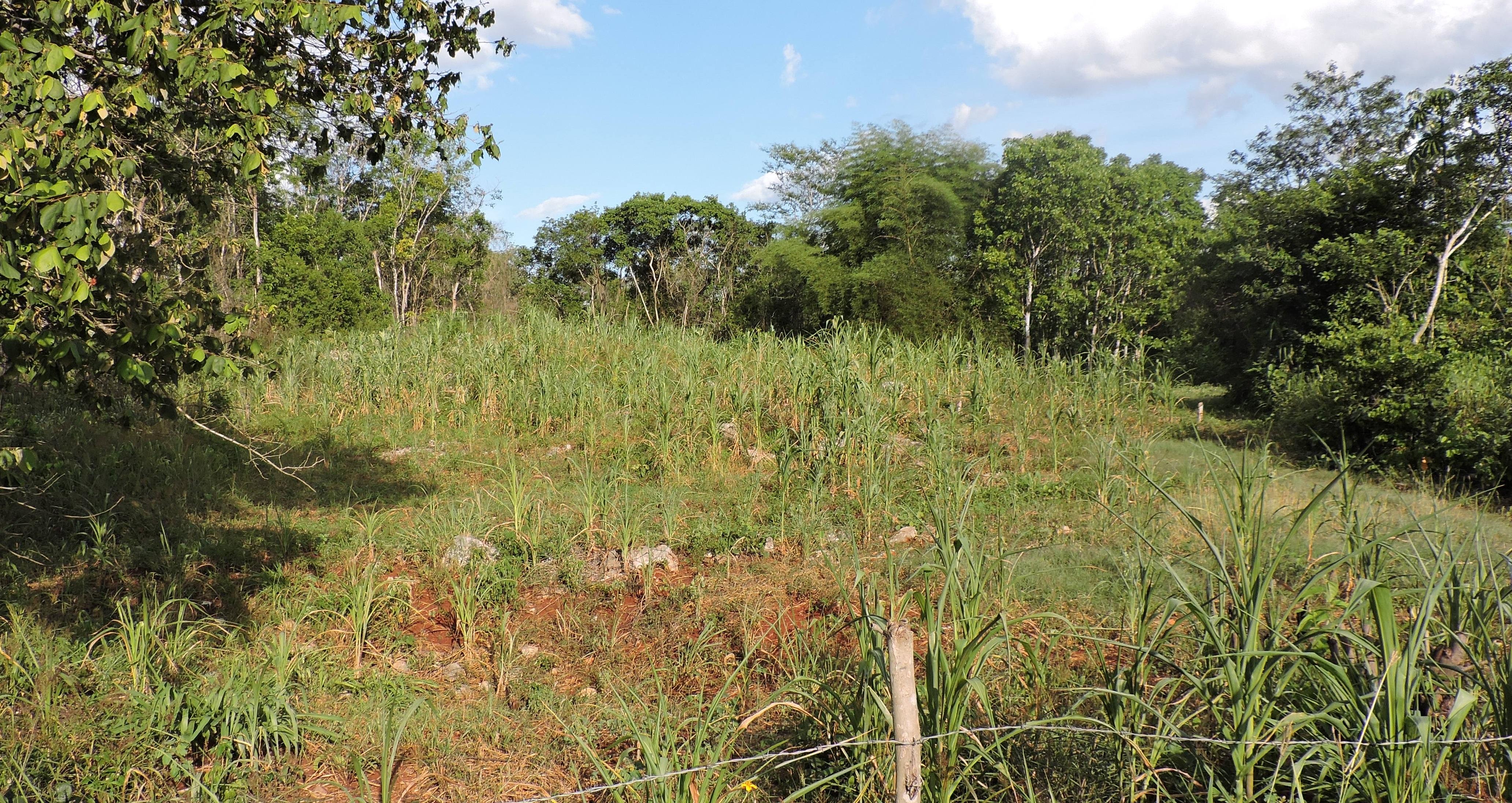 Agronomía y la cultura maya