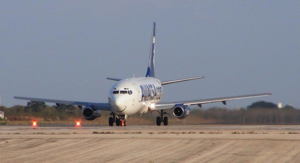 Controlan presencia de aves en ruta de aviones en aeropuerto de Mérida