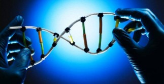 codigo-genetico