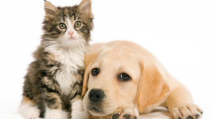 Perros y gatos pueden sufrir cáncer de  piel por sobreexposición al sol