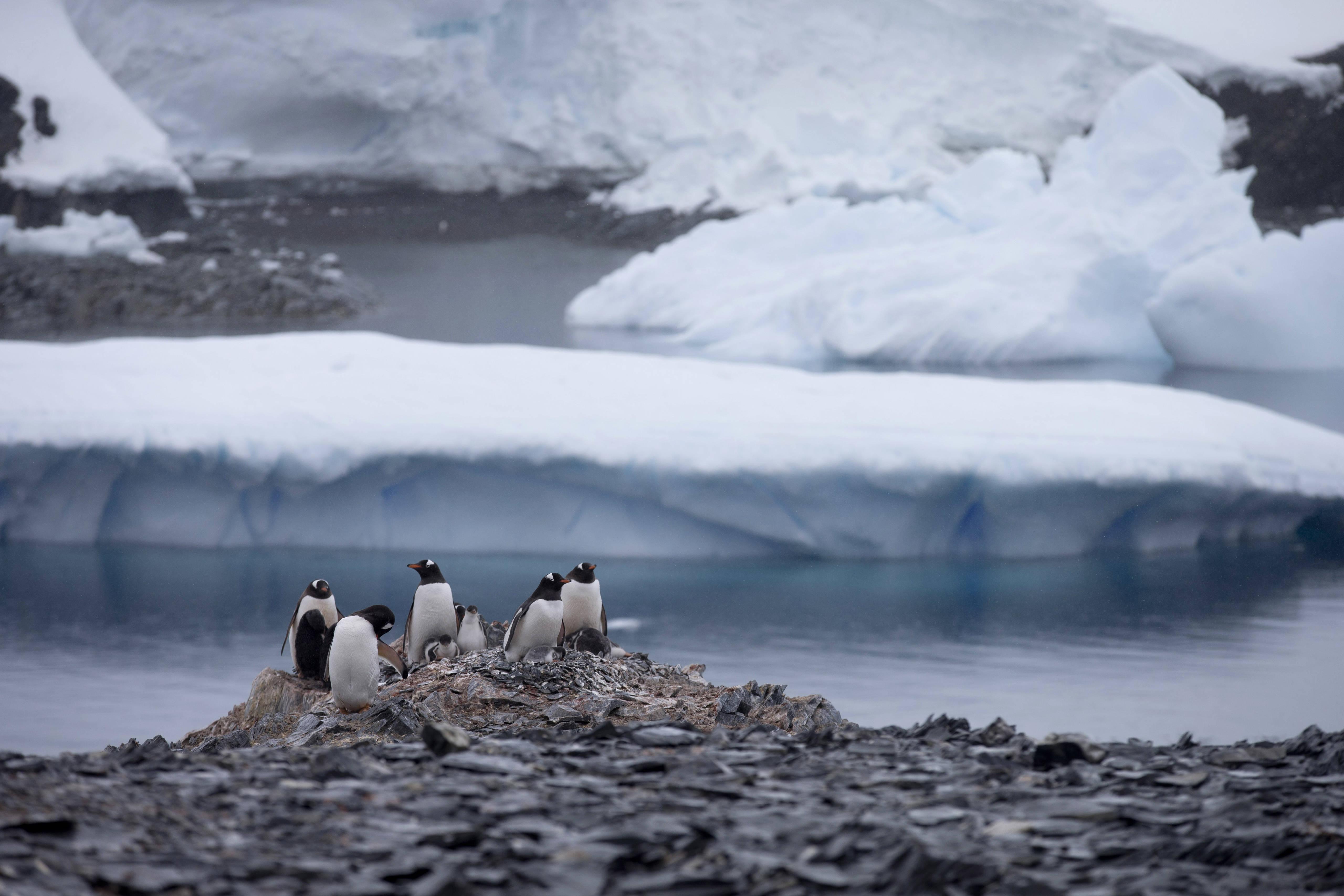Mueren más de 150 mil pingüinos de la Antártida