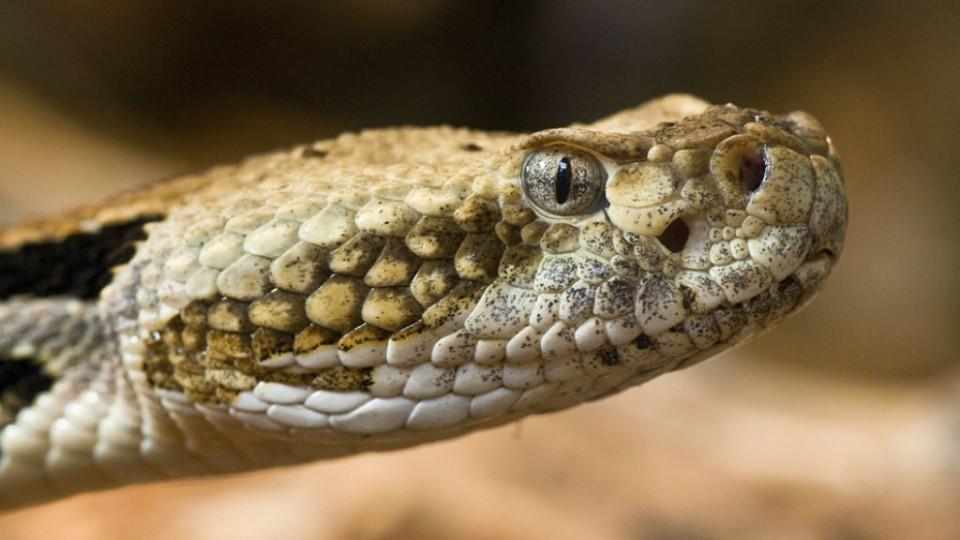Polémico proyecto que busca poblar isla con serpientes venenosas