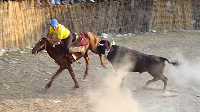 Plantean en Yucatán ley contra torneos de lazo y corridas de toro