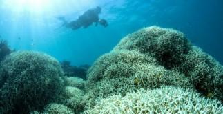 corales_australia_decolorados