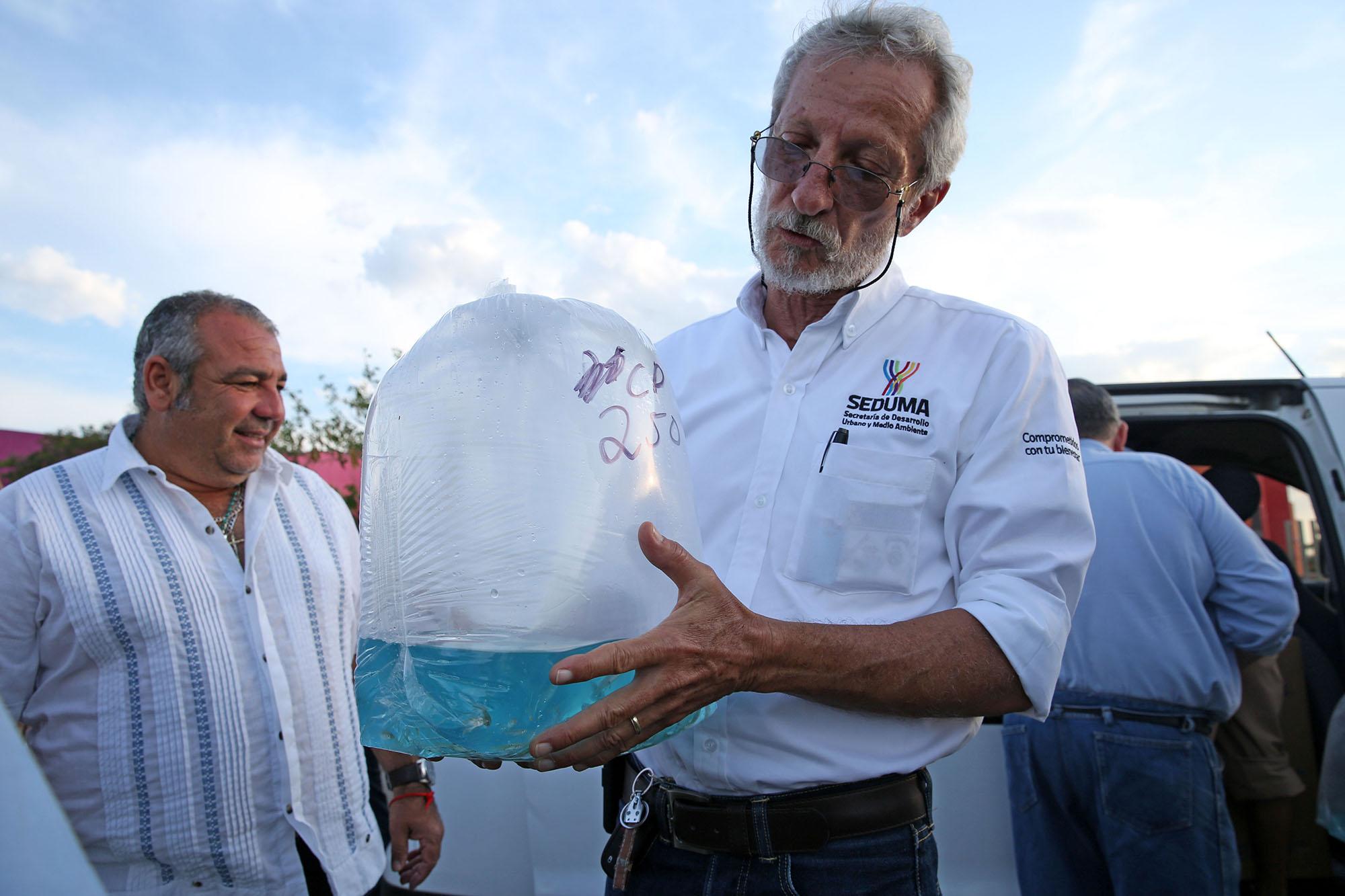 Combaten moscos en Yucatán con peces