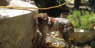 perro_rescatado_motul1