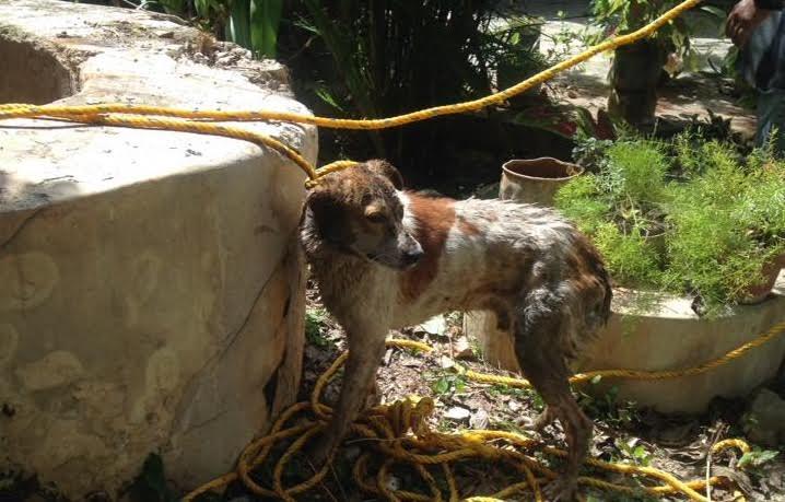 Protección Civil rescata de pozo a perro en Motul
