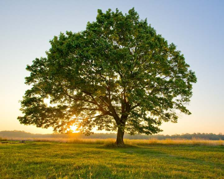 Los árboles también duermen: estudio