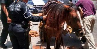 caballo_proteccion