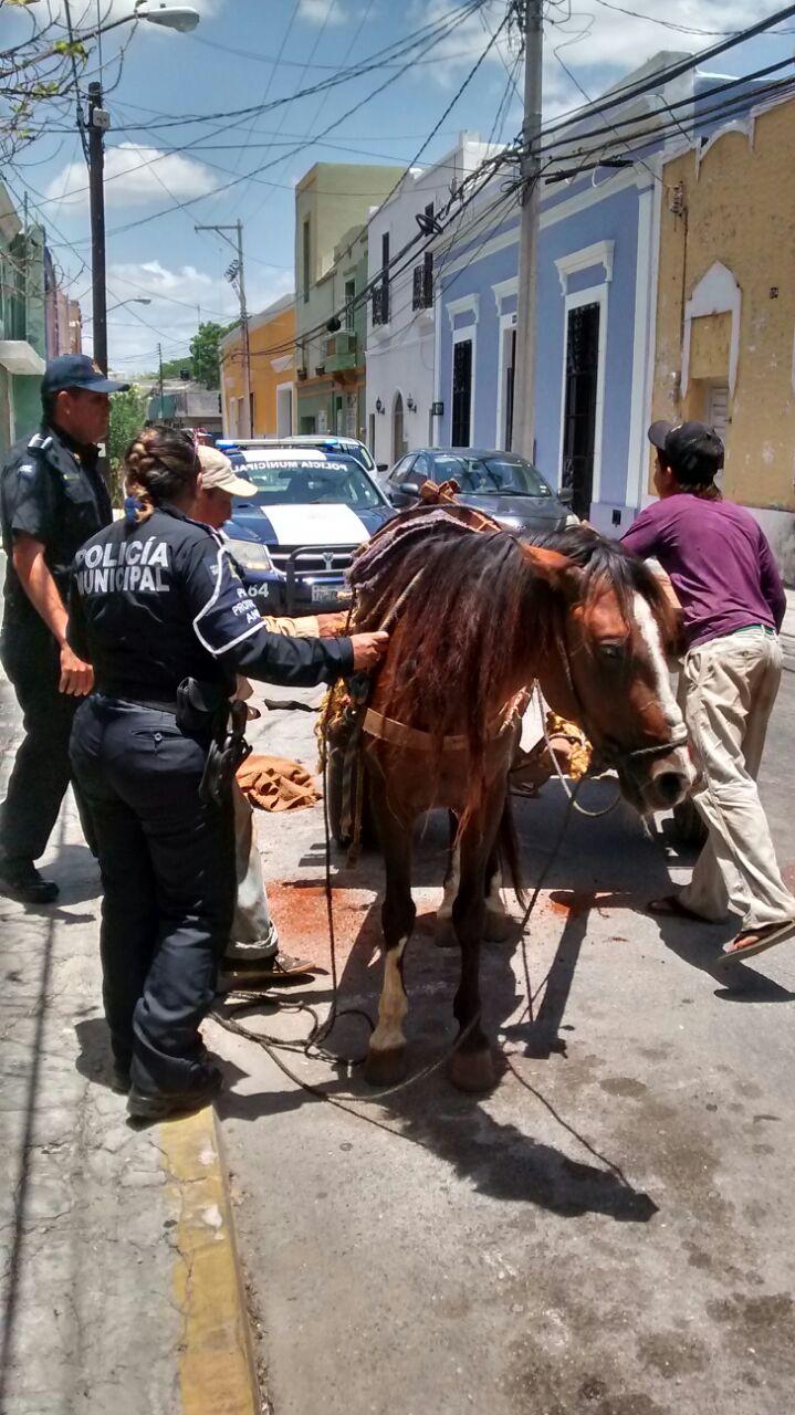 Unidad de Protección Animal rescata a 2 caballos en Mérida