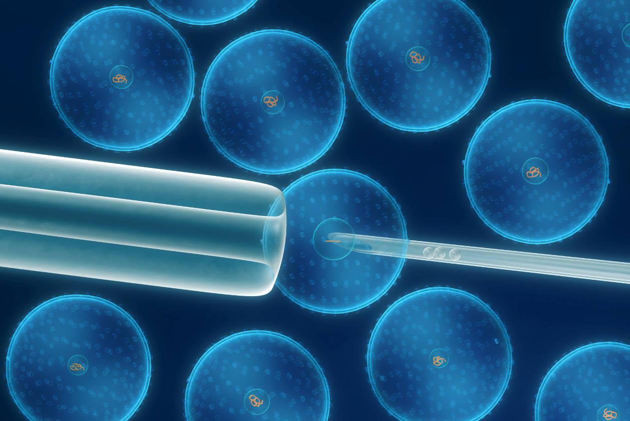 Descifran primeros pasos de células adultas a células madre