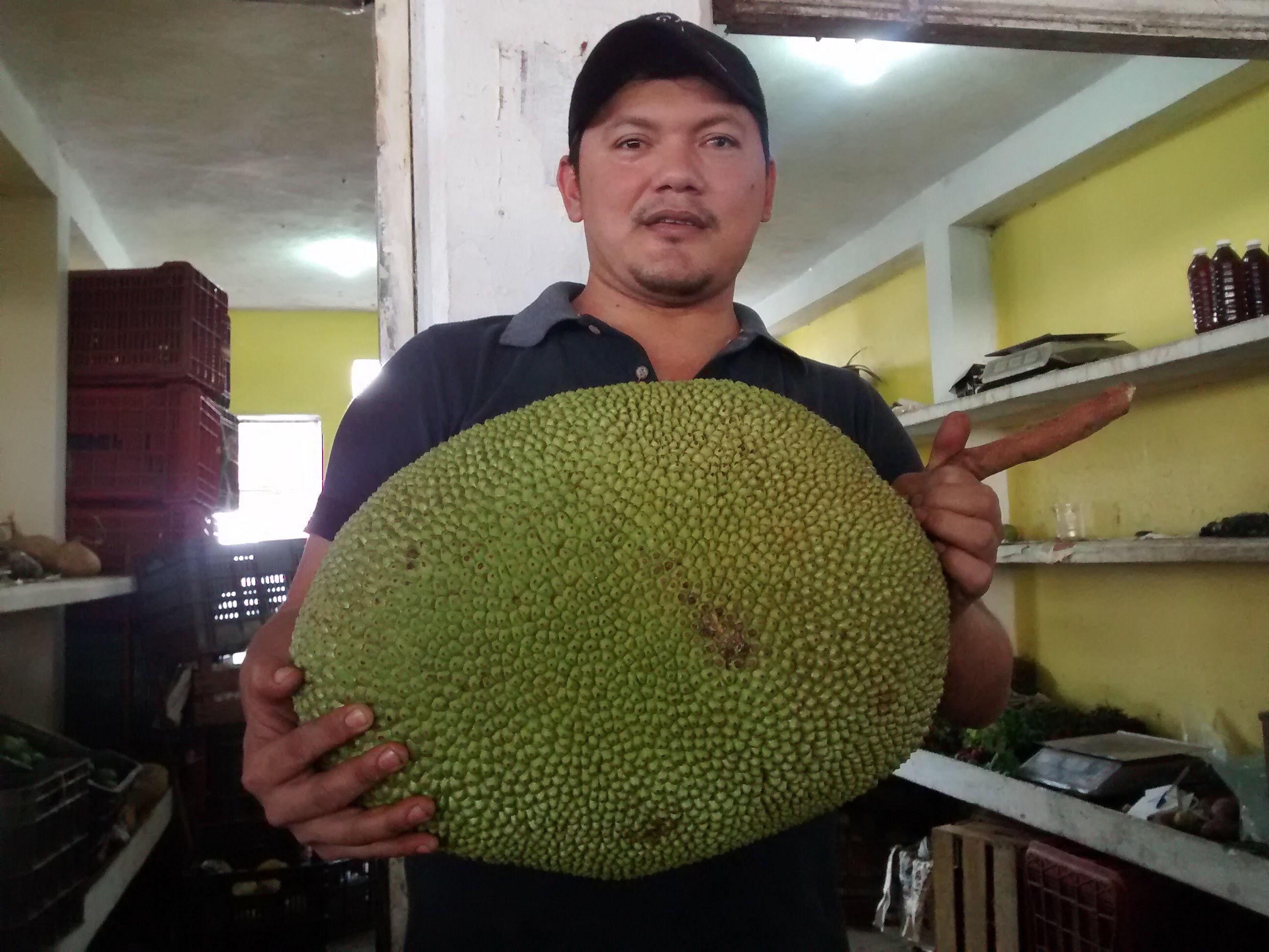 La fruta más grande del mundo: la yaca