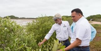 rolando_manglares