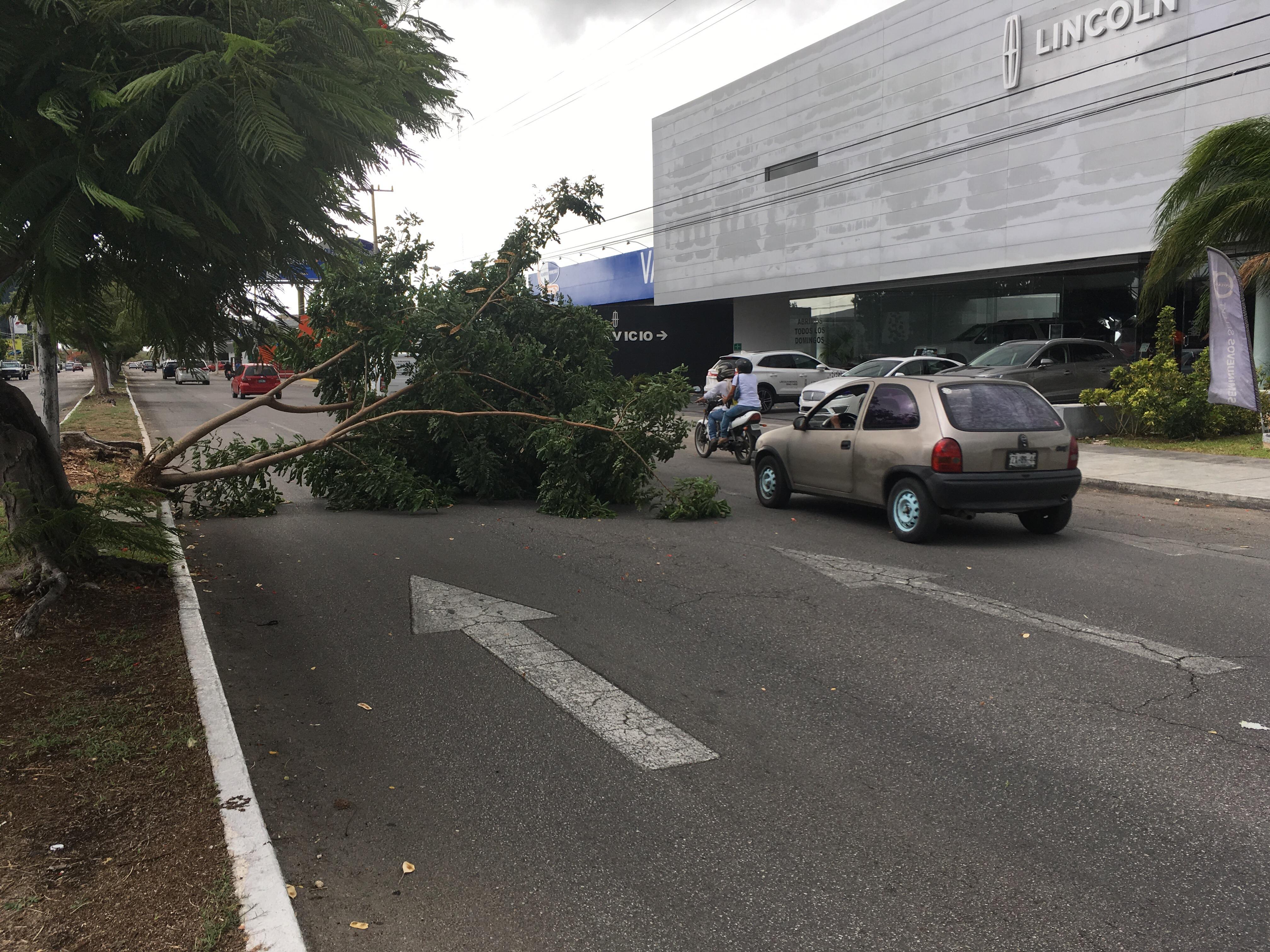 Calles anegadas y árboles caídos en Mérida por lluvia y viento