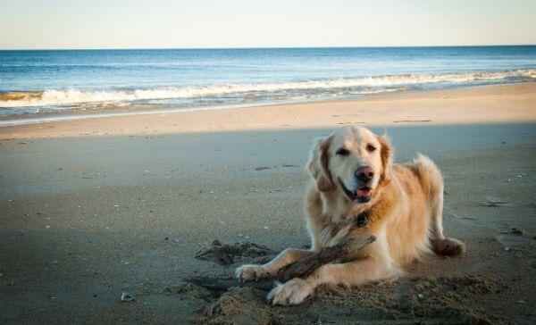 Certificarán playa de Cancún amigable con animales
