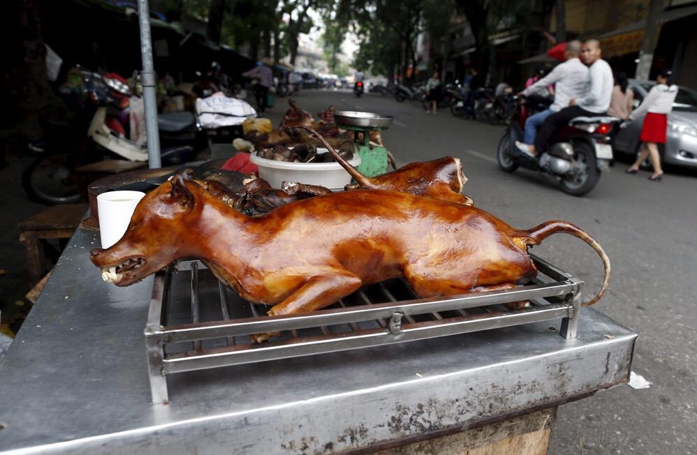 Comienza festival de carne de perro de Yulin pese a protestas