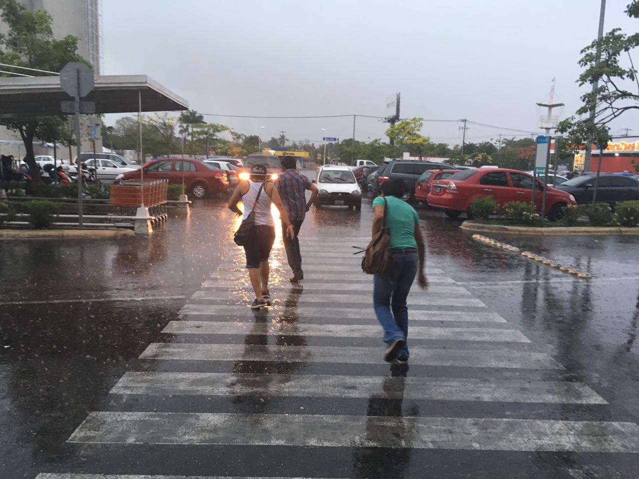 Alertaproliferación de moscos por lluvias