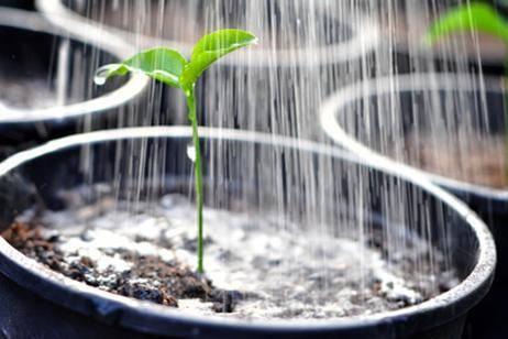 Maceta inteligente evita desperdicio de agua