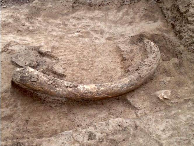 Descubren restos óseos de mamut en Querétaro