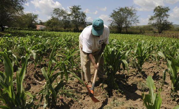 Consumir productos locales, clave para la agricultura yucateca