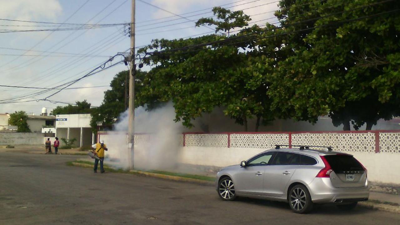 Intensifican fumigación en Yucatán para controlar al Aedes Taeniorhynchus