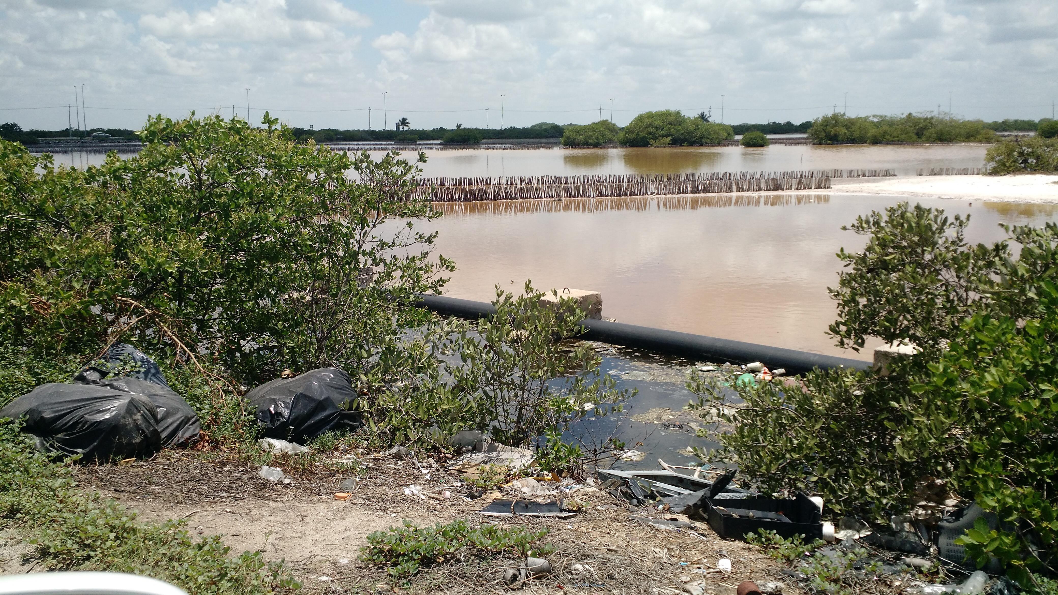 Inmerso Chicxulub Puerto en basura y pestilencia