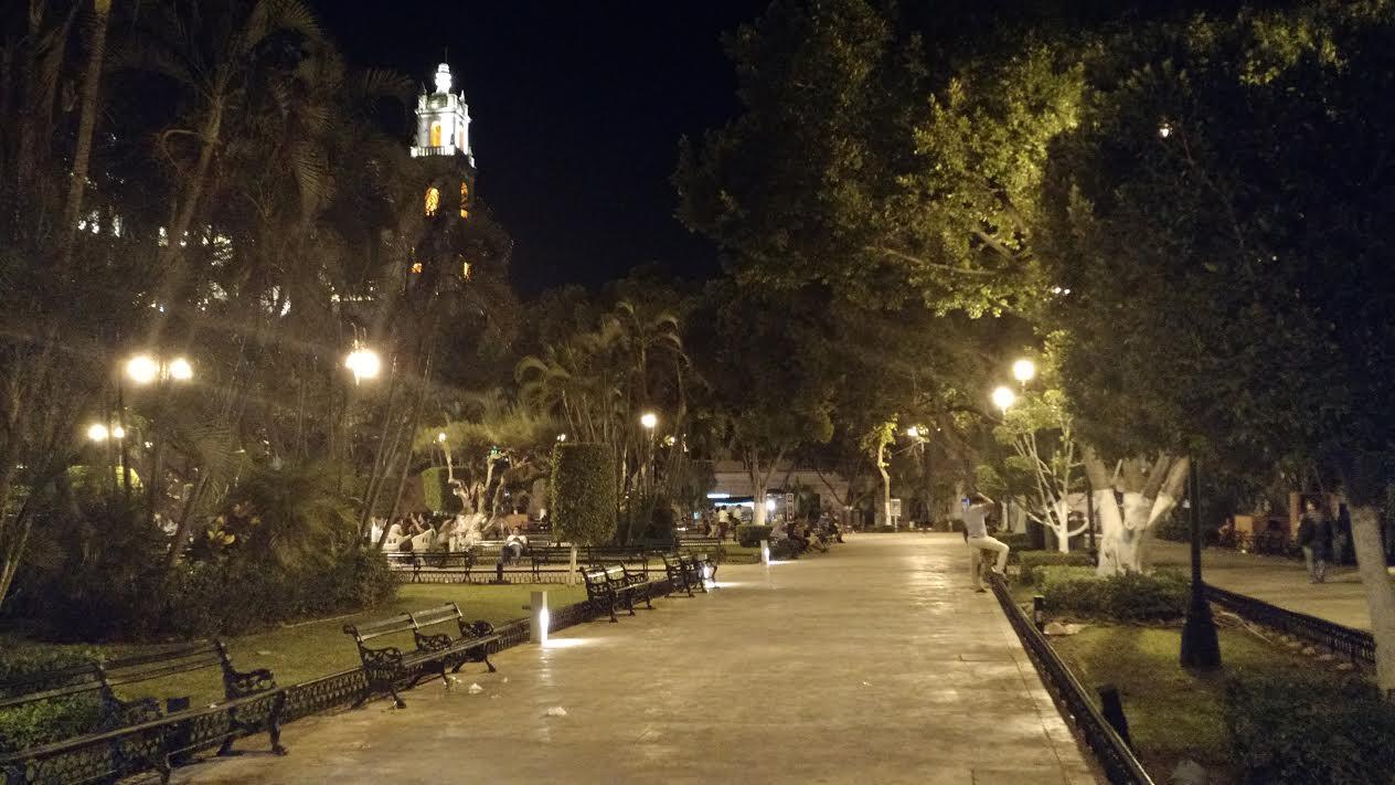Podarán ramas de árbol de Laurel ubicado en Plaza Grande