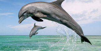 extincion-oceanos
