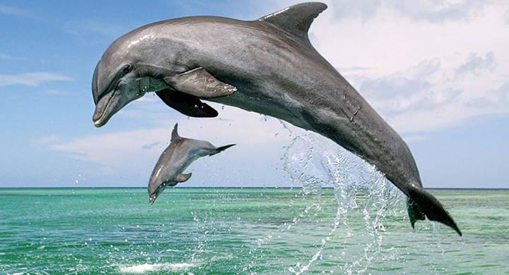 Océanos enfrentan extinción masiva sin precedentes