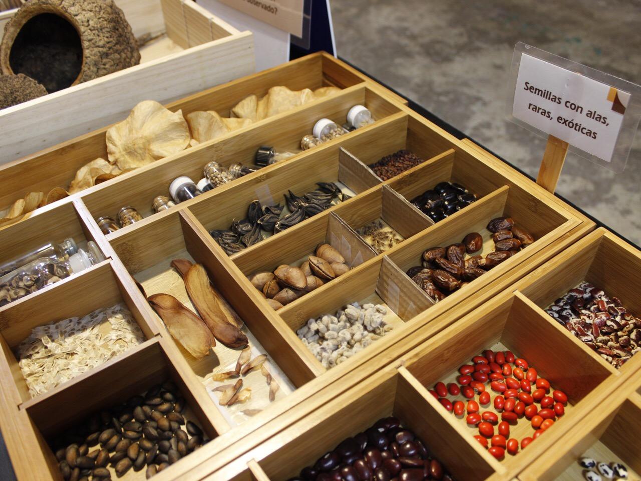 Abren muestra de semillas y legumbres de más aprecio en Yucatán