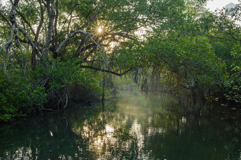 Sun rises in the mangrooves of Los Tuxtlas Biosphere Reserve. Veracruz, Mexico.
