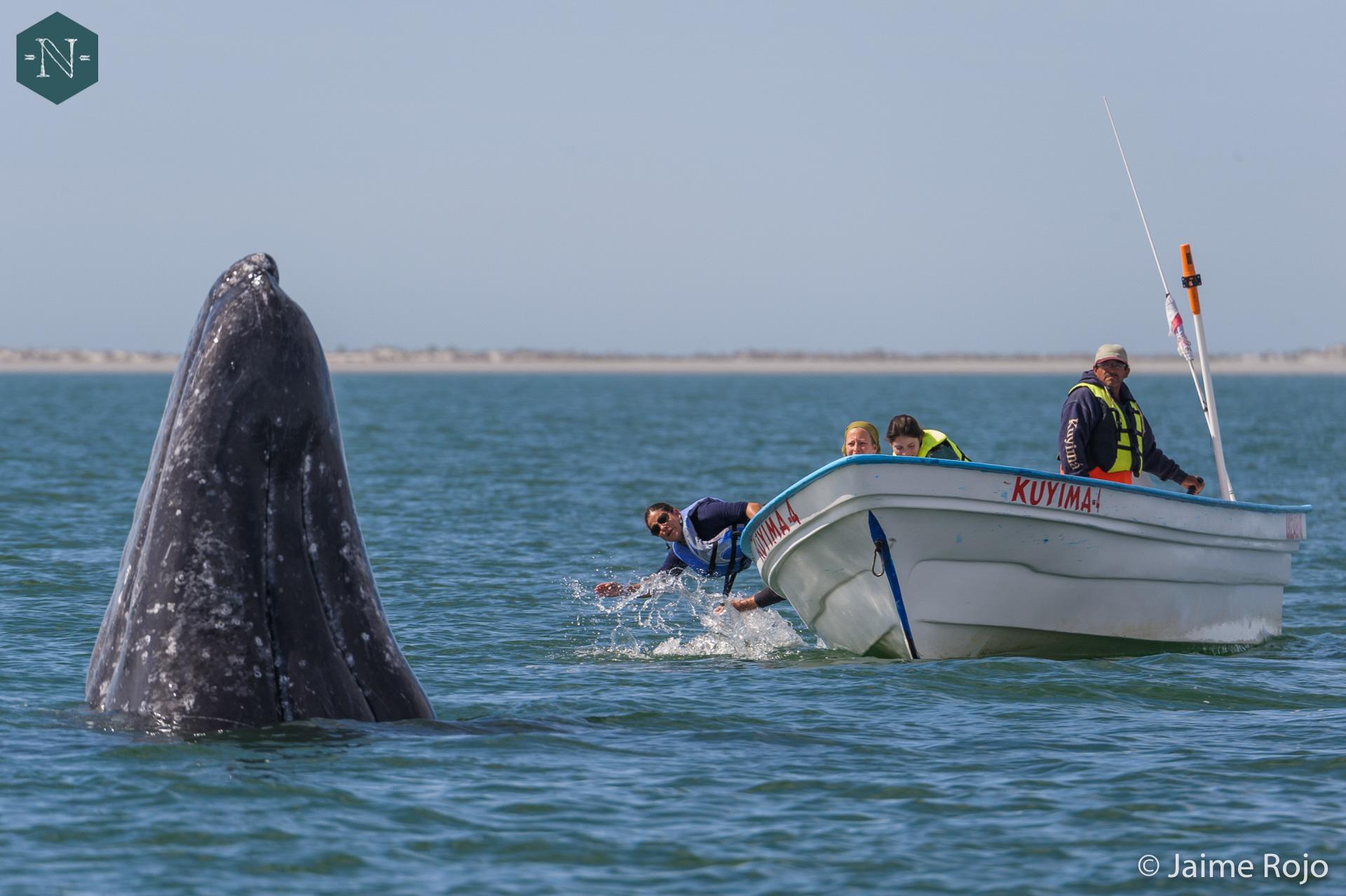 Ecoturismo marino: riqueza del océano va más allá de la pesca