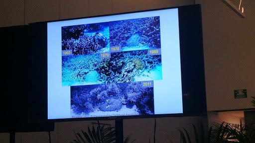 Arrecife Alacranes, fragilidad amenazada