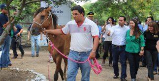 caballo_adopcion