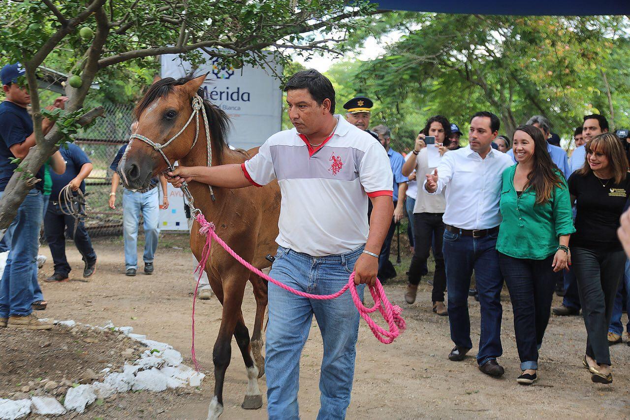 """Dan en """"adopción"""" a ex caballo tierrero"""