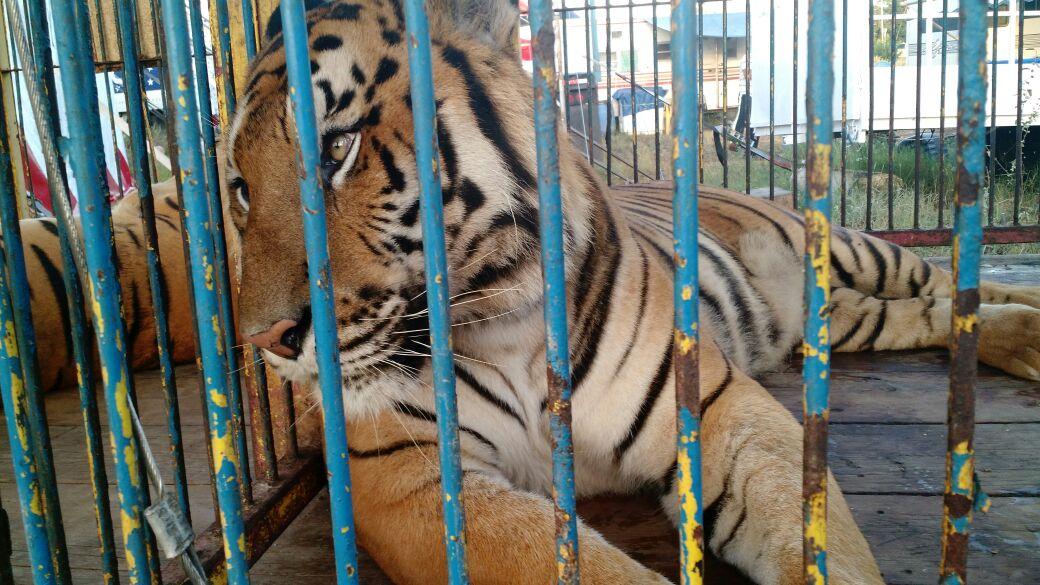 Impone circo revés legal contra Profeco